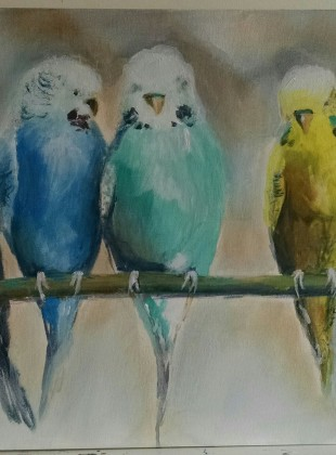 Budgie's for sale