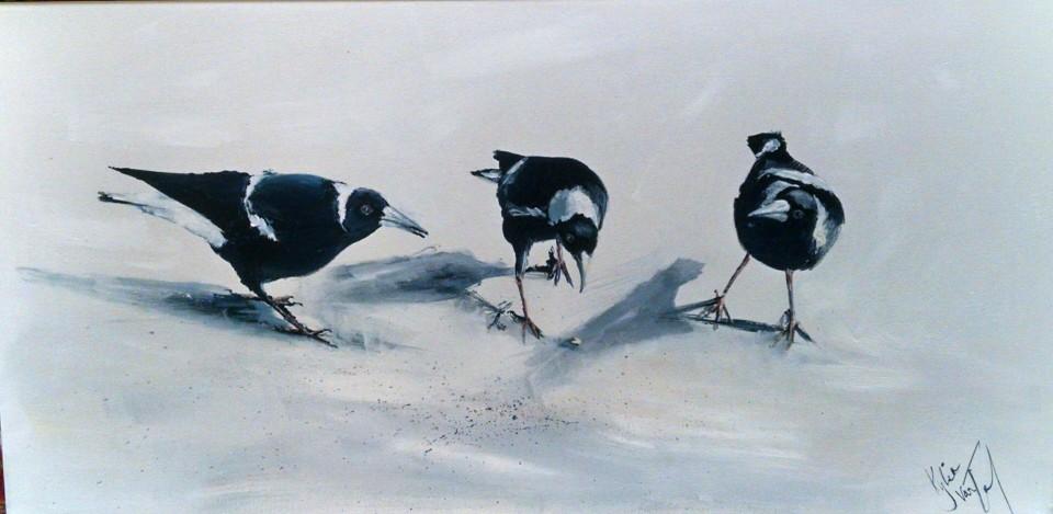magpies