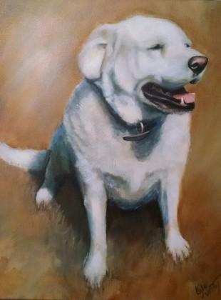 Labrador Comission