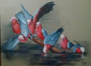 Galah Banter - Kylievantol paintings